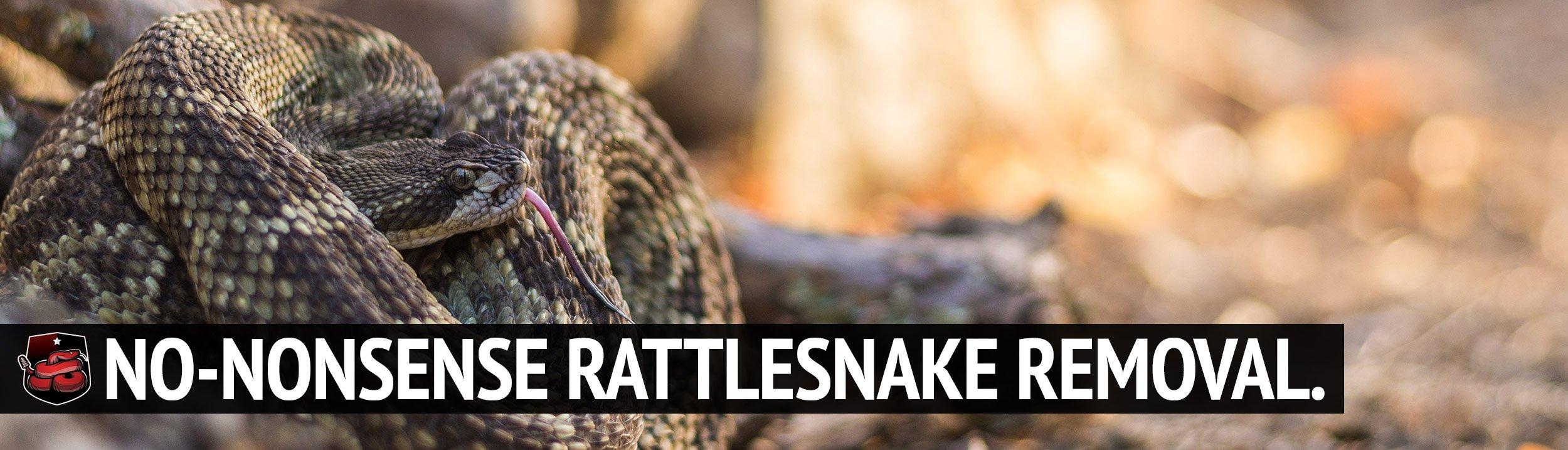 s6 | Rattlesnake Removal | Placer Snake Removal
