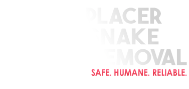 Rattlesnake Removal | Placer Snake Removal